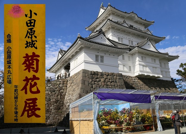 IMG_5856 小田原城菊祭り