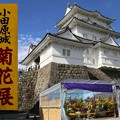 Photos: IMG_5856 小田原城菊祭り