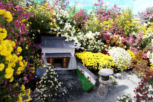 IMG_5860 菊花繚乱小田原城