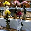 Photos: IMG_5918 切り花の部