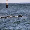 Photos: IMG_6376 海を見ていた午後・秋の相模灘