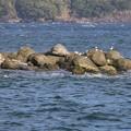 IMG_6397 海を見ていた午後・海鳥