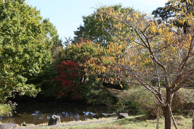 IMG_6104 幕山公園・池