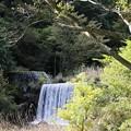 Photos: IMG_6201 幕山公園・堰の小滝