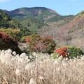 IMG_0145 幕山公園・オギ群生からの眺め