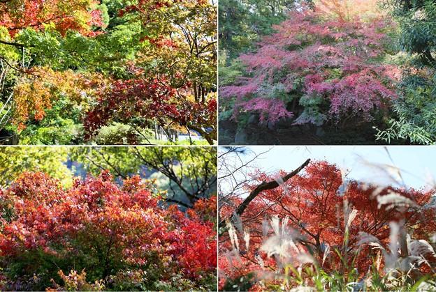Photos: IMG_6047 幕山公園・紅葉2019その1