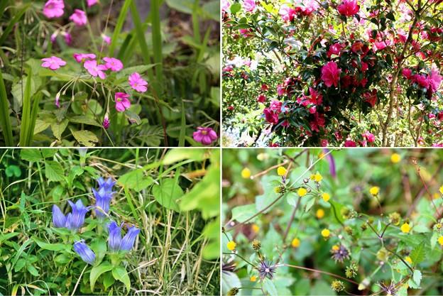 Photos: IMG_6187  幕山公園・植物ー1