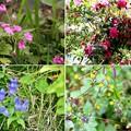 IMG_6187  幕山公園・植物ー1