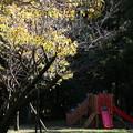 IMG_0171 幕山公園・遊具広場
