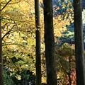IMG_6034 幕山公園・秋の山