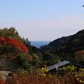IMG_0163 幕山公園・ちら見えの相模灘