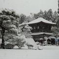 DSCN2434  雪中銀閣寺-1(テーマタグ:ベストショット)