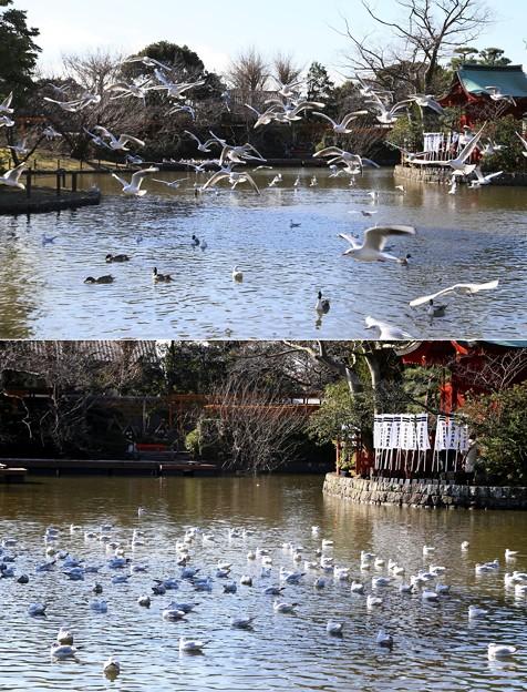 IMG_7434 新春の光の中に舞う鳥達の群れ