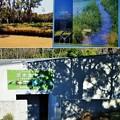 淡水生物案内と淡水生物館