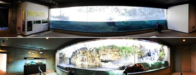 葛西臨海水族園別館淡水生物館内部パノラマ