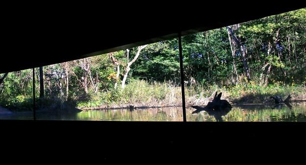 淡水生物館のガラス越しの自然観察-1