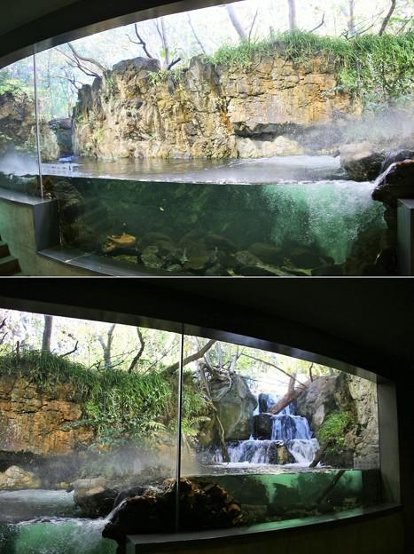 淡水生物館のガラス越しの自然観察ー2