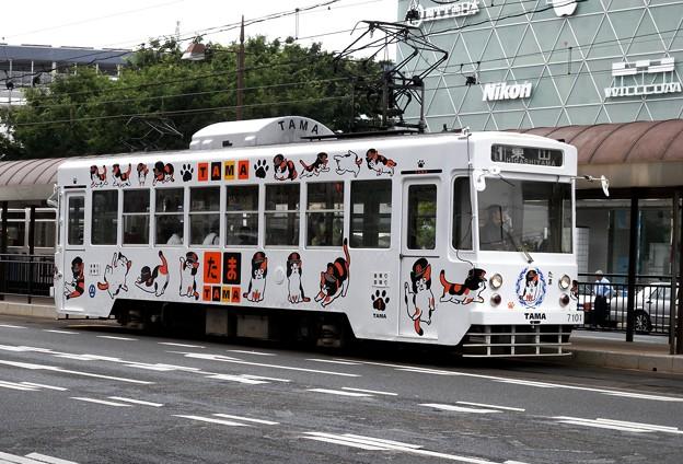 たま電車岡電版(テーマタグ:鉄道)