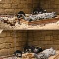 Photos: 将軍山古墳・埋葬の様子