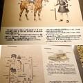 Photos: 将軍山古墳の埋葬状態説明