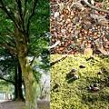 Photos: さきたま古墳公園・豊かな自然