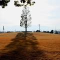 Photos: 公園の陽は傾いて・・・