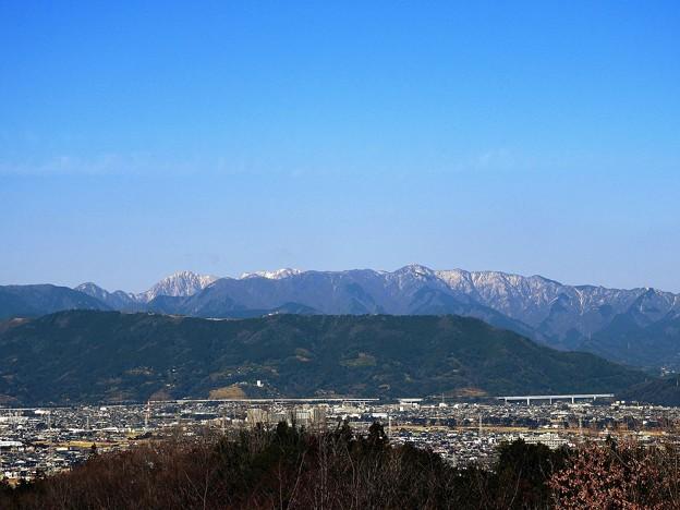 河津桜の咲く松田山(頂上にハーブガーデンがあるよ!)