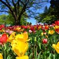 写真: 昭和記念公園