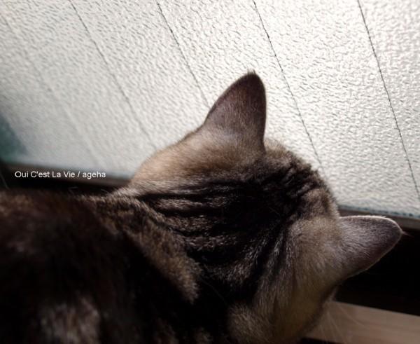 むむぅ。(コバチとかハバチとかいろいろを見る猫)