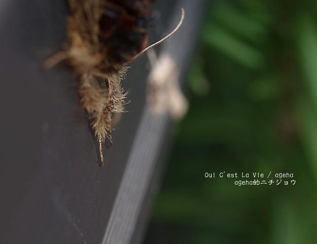 Photos: なにこのモフ毛。