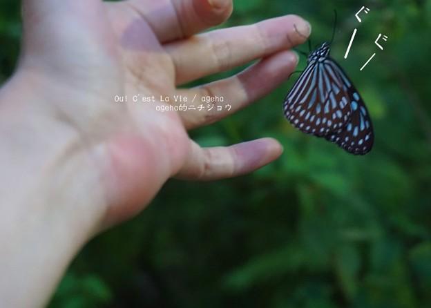 でも蝶は寝てるわよ。(足立区生物園)