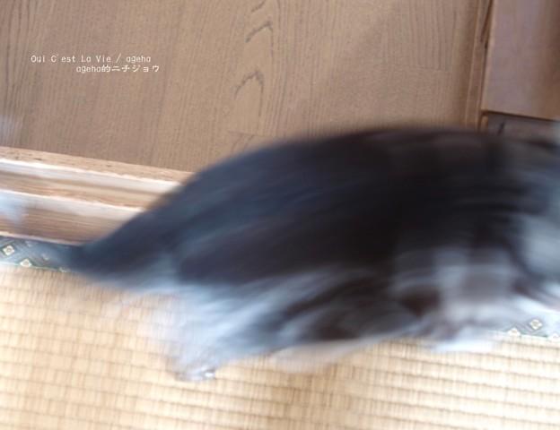 見せて~と騒ぐ猫に(ナミアゲハ飼育)
