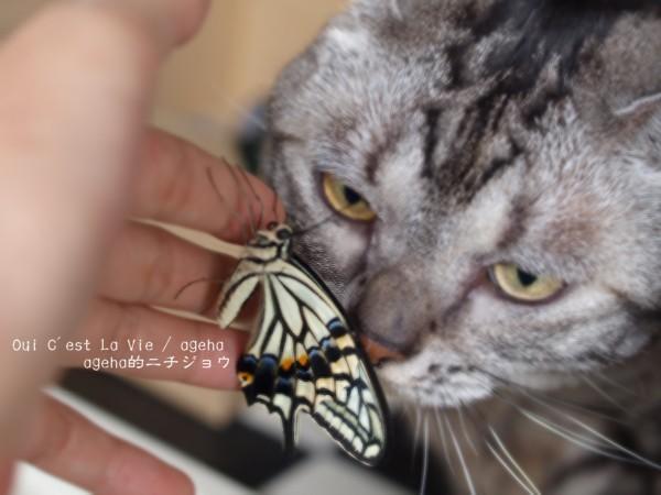 恒例の猫チェック。(ナミアゲハ飼育)