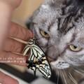 Photos: 恒例の猫チェック。(ナミアゲハ飼育)