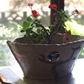 Photos: 梟鉢カバー。(ハナキリン)