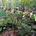Photos: 蛹ロープ。(荒川自然公園)