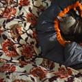 Photos: 寝袋眠子。