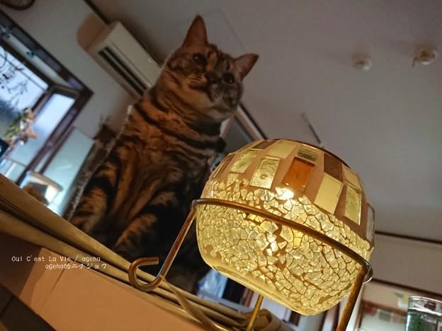 Photos: フェリシモ のソーラーガーデンライト。