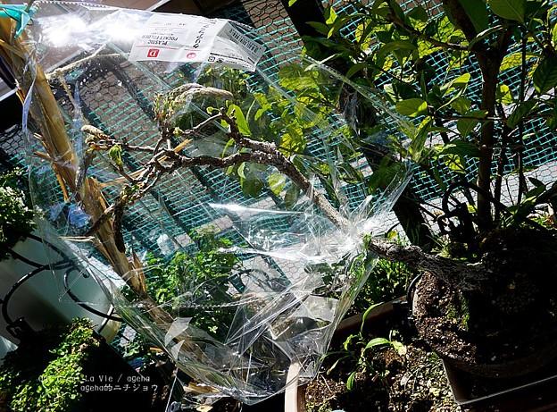 鳥防止包み。