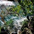 Photos: 鳥防止包み。