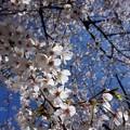 温かい春です。