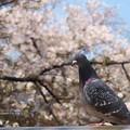 Photos: 鳩の日も