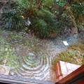 Photos: 大雨に流される水入れ。