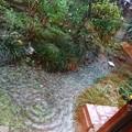 Photos: 庭が川になる日。