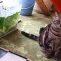 Photos: お魚に興味無いヨ。