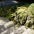 Photos: 苔むした階段を降りると。(旧古河庭園)