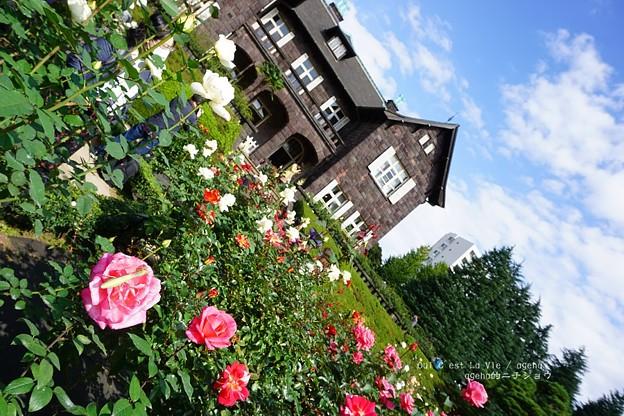 秋バラを楽しむのは人間だけじゃあない。(旧古河庭園)