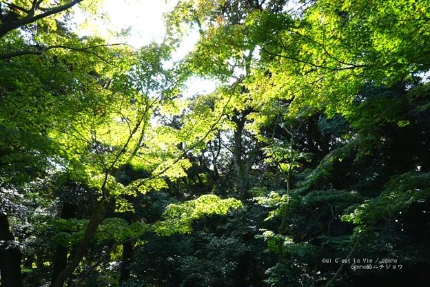 木漏れ日の向こうに庭園。(旧古河庭園)