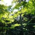 Photos: 木漏れ日の向こうに庭園。(旧古河庭園)