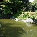 Photos: あんな所にハンターが。(旧古河庭園)